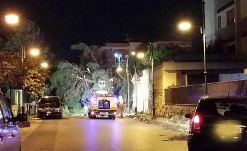 papa charlie protezione civile emergenze